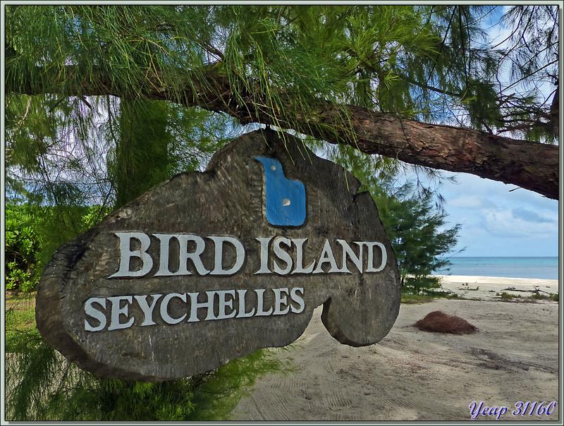 L'adieu à Bird Island, petit paradis perdu mais plein de vie au milieu de l'Océan Indien - Seychelles