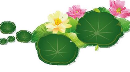 Fleurs de Lotus....