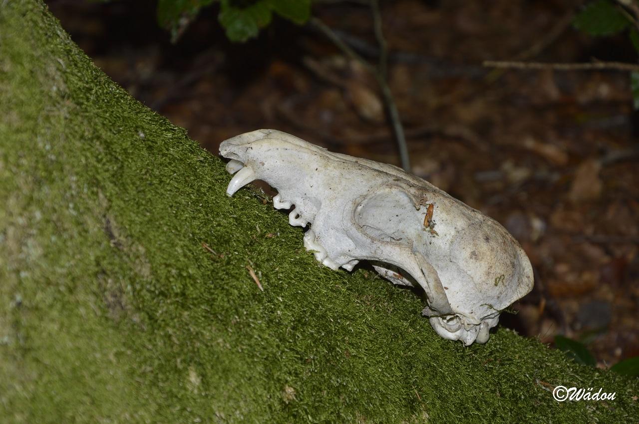 Safari champignons