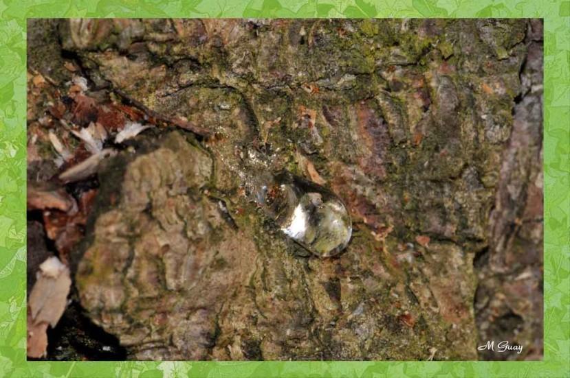 seve-arbre-5514.jpg