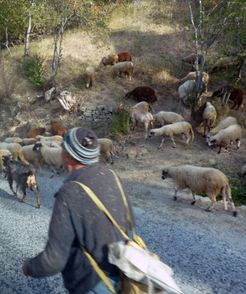 Jour6- Sur la route de la grotte de Yagodina