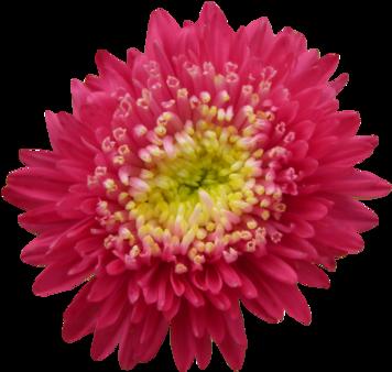 Tube fleurs du jardin