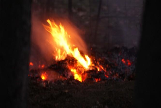Fresquel feu 7544