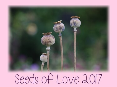 Seeds of Love 2017 - J-5 : quelques consignes importantes
