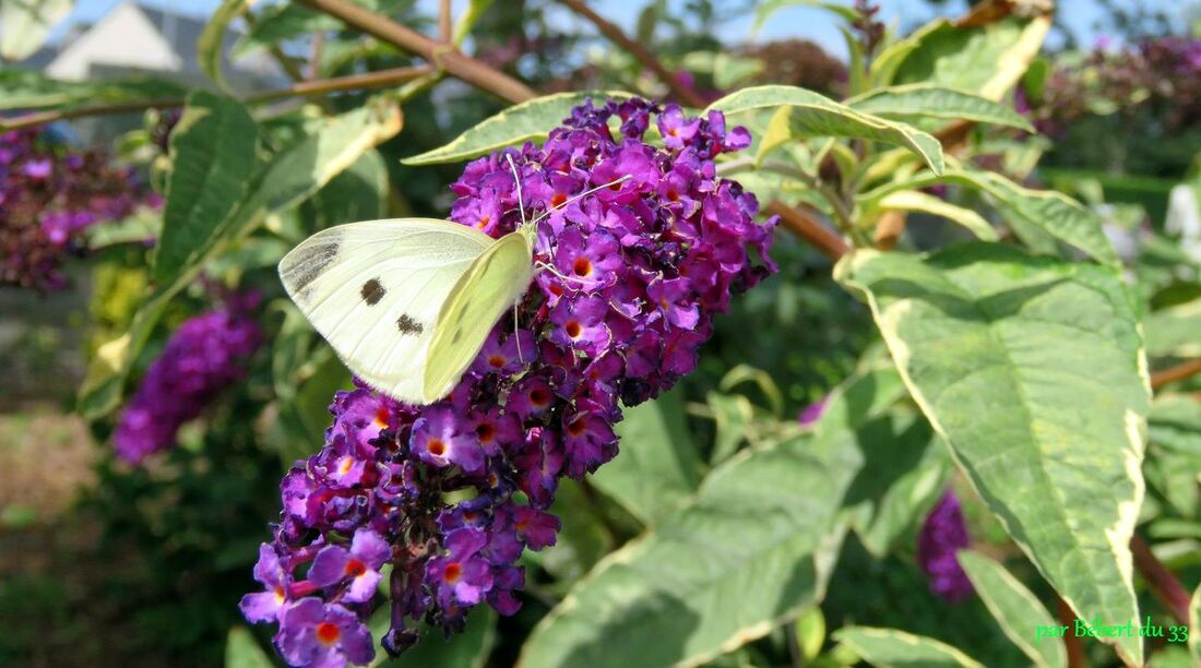 et d'autres papillons !