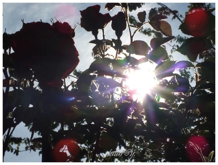 Grand soleil. 4)