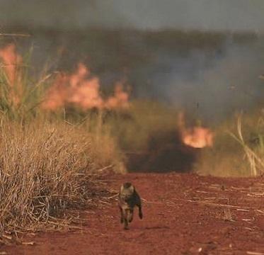 L'Amazonie brûle ...