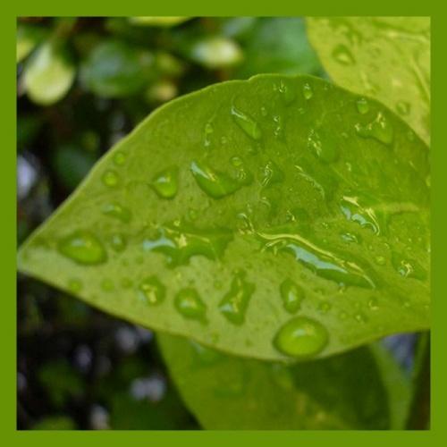 La vie en couleurs: vert