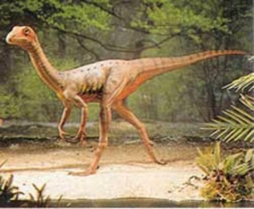 Le Compsognathus