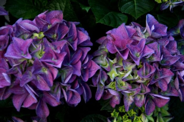 Les Jardins d'Aywiers - Printemps 2014 : mes achats