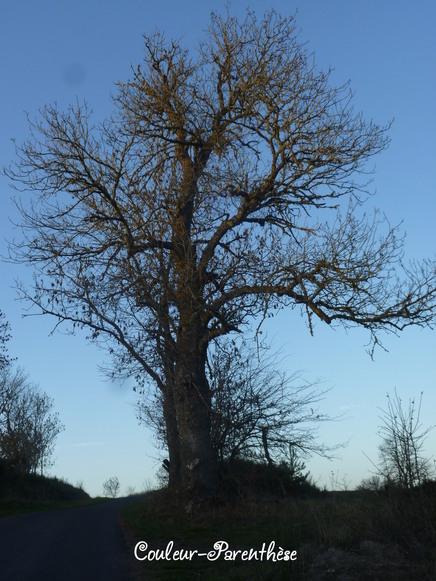 Les arbres compagnons!