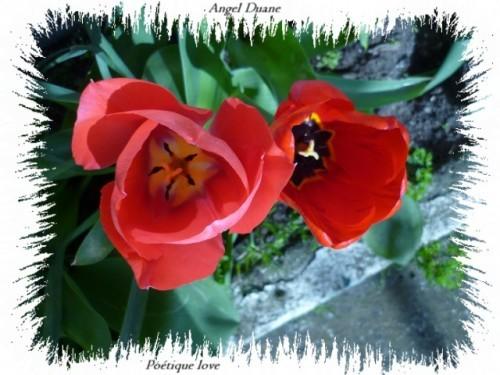 Jardin-D-Ete-2013-Tremblaycopiry-AD--5-.JPG