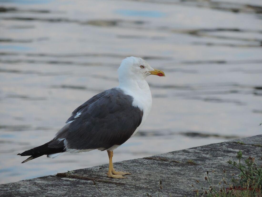 Des oiseaux au bord de la mer