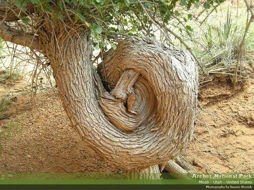 Cafard d'arbre...