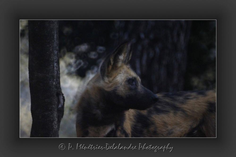 Test d'objectif au parc Zoologique de Montpellier Lunaret