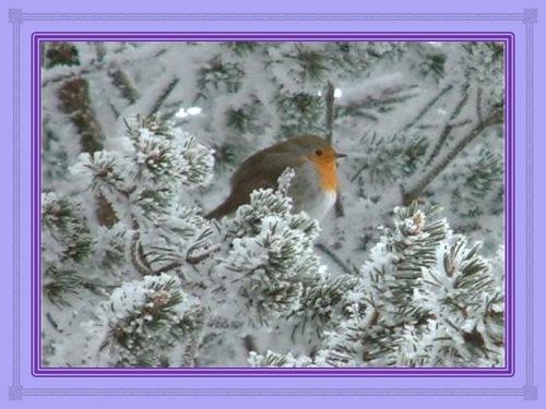 Conte de Noël : le sapin, roi des forêts