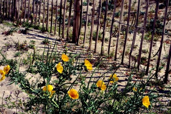 03---Fleurs-et-ganivelles.JPG