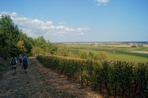 """""""Entre vignes et forêts"""" - Mercredi 19 septembre 2018"""