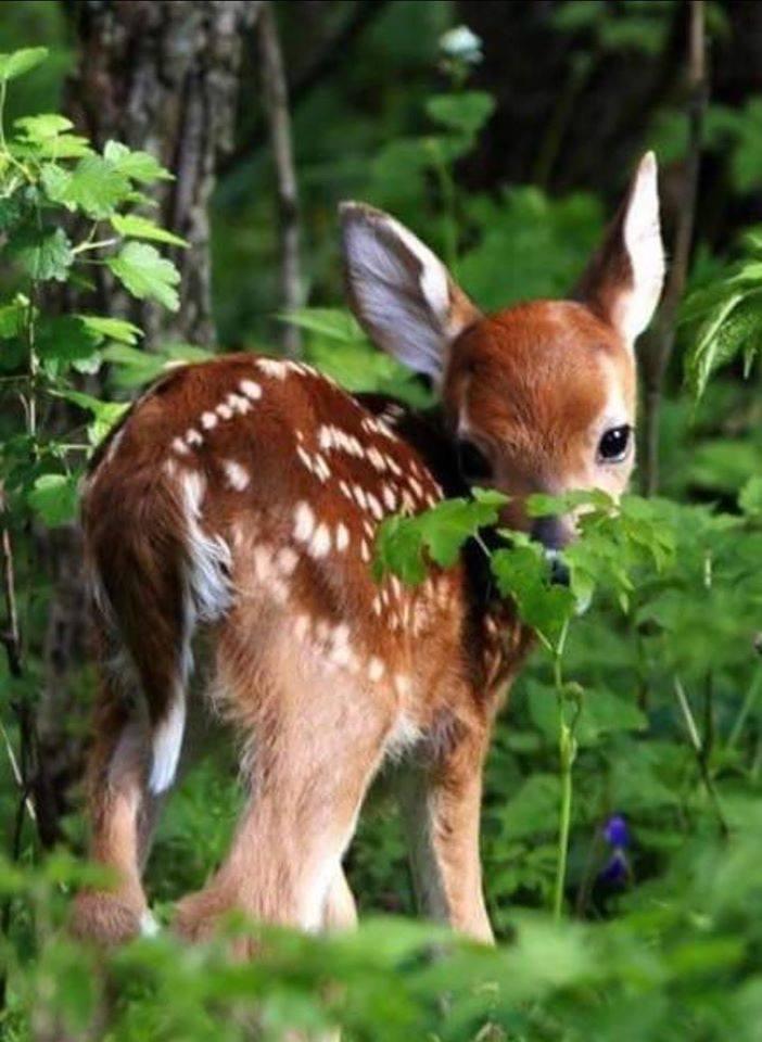coucou bambi - bon dimanche