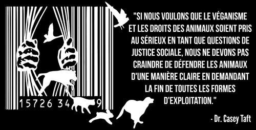 Bienvenue sur le site de la Cause Animale