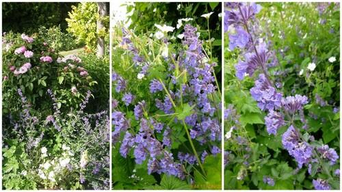 Du bleu au jardin
