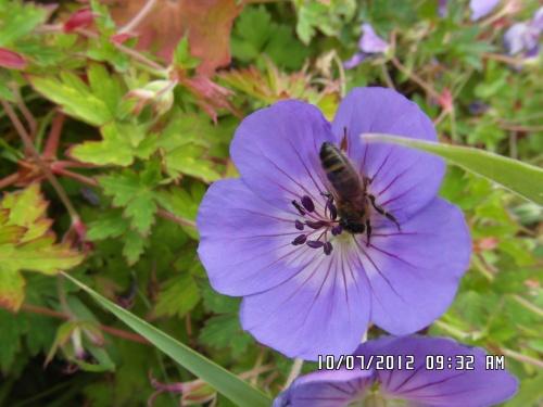 Fleurs avec de la visite