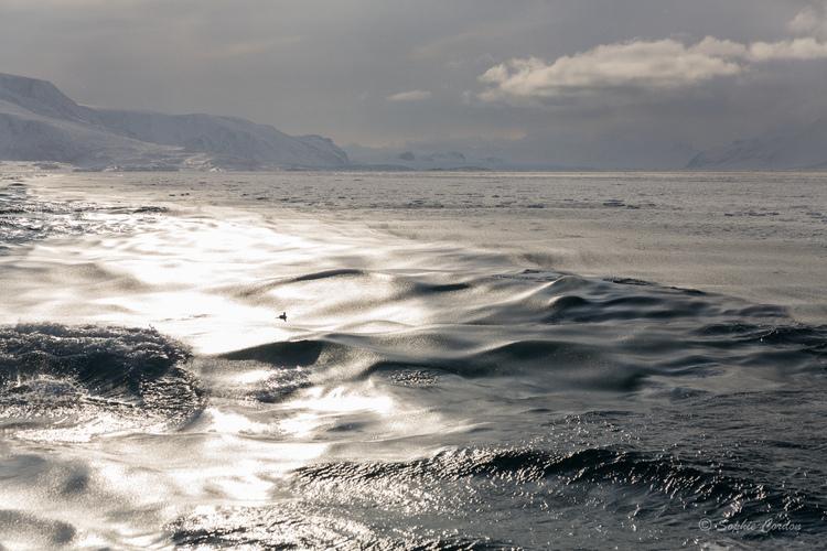 Austfjorden... suite