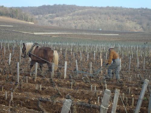 les Grands jours de Bourgogne 2012