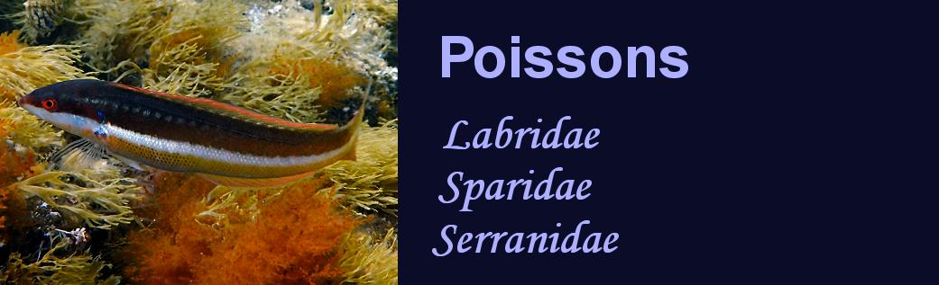 http://ekladata.com/BOC4x29ptbijGe6mUsN-4wdy2RQ/banniere-poissons-mediterranee.png