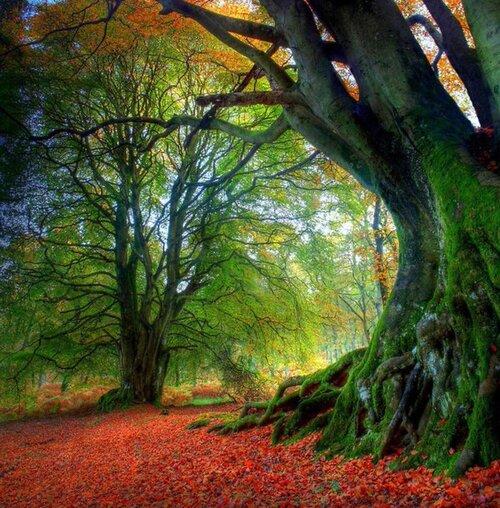 Interview Rupert Sheldrake : La nature consciente