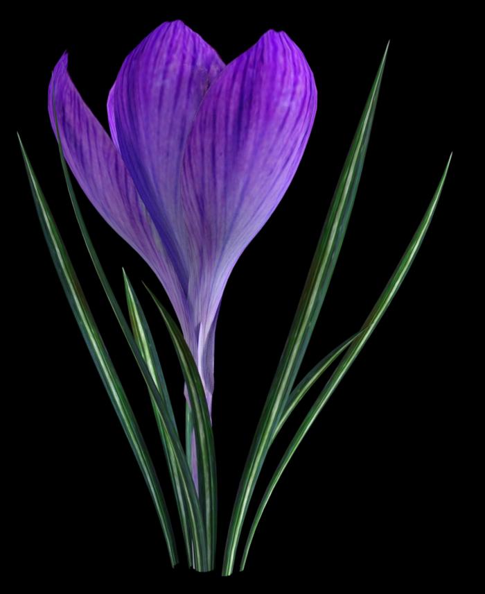 "Tube de fleurs ""Crocus"" (render-image)"