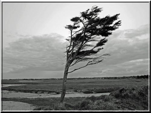 """""""Le vent"""" poème d'Emile Verhaeren"""