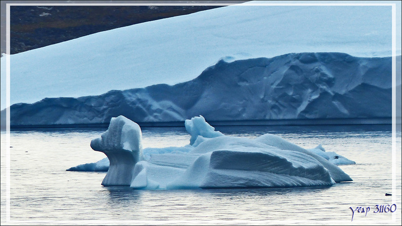 Un joli petit canard bleu - Kullorsuaq - Qaasuitsup - Groenland