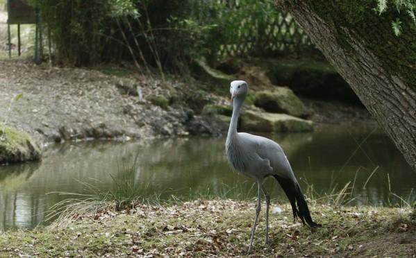 Drole oiseau2