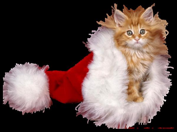 Tubes animaux Noël 5