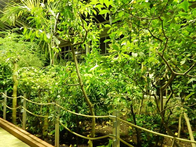 Nocturne au jardin botanique de Meise
