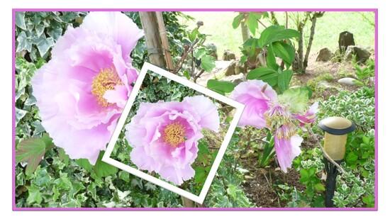 Quelques fleurs d'Avril