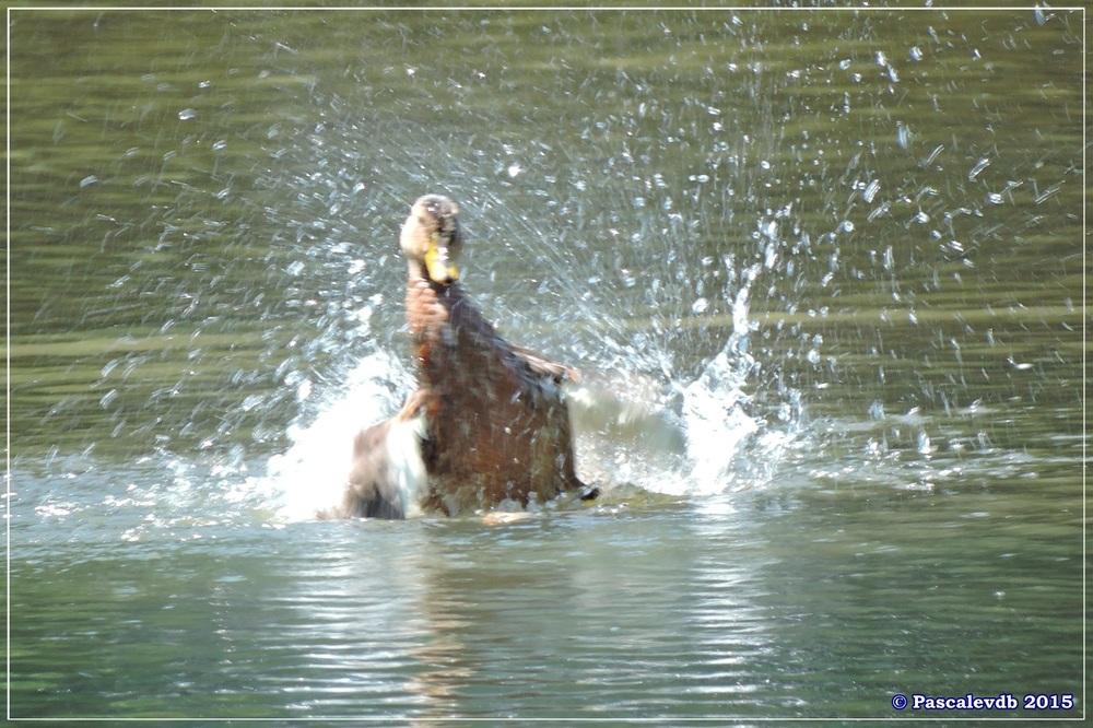 Les étangs de Monsalut - Début Août 2015 - 6/7