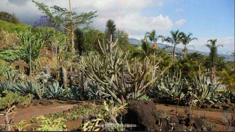 Le jardin des Cactus