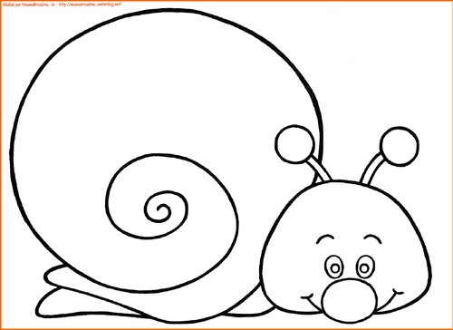 Escargot n ° 1