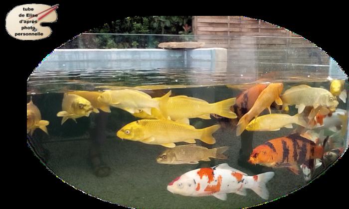 Animaux étang 3