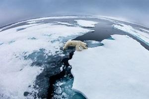 La complainte de l'ours blanc ?