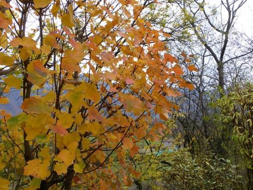Big garden et l'automne