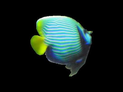 Tubes de la Faune sous- marine
