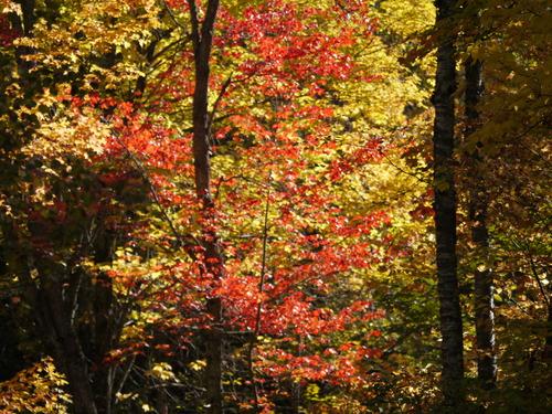 L'automne pour Mil défis