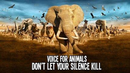 voice for animals