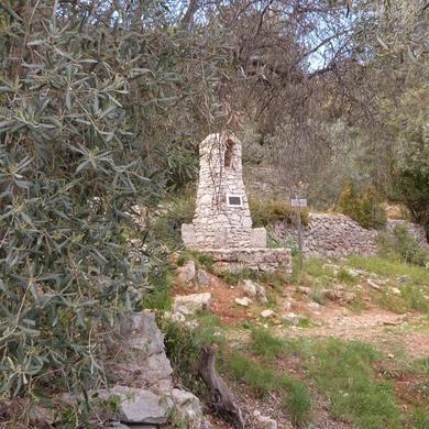 Le conservatoire de l'olivier...