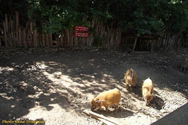 Le zoo d'Amnéville vu par René Drappier