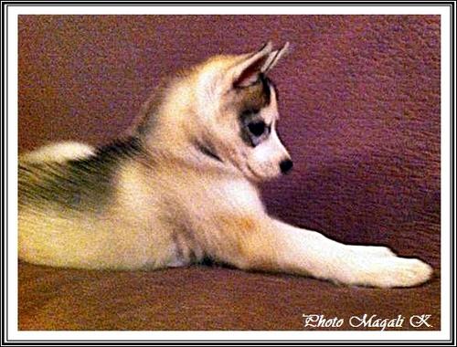Damon (2 mois)