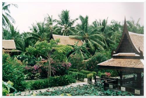 Thaïlande. Kho Samui.